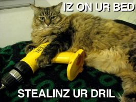 Yet Another LolCat by Vanyamuina