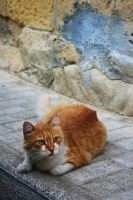 Street Cat by UbhejanePhotographic
