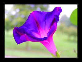 Morning Glory Glow by VoDooClown