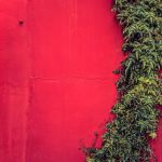 Red Forrest by Pierre-Lagarde