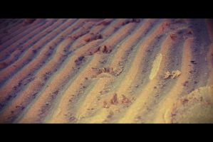 Paw Prints in the Sand by shelleyytamaraa