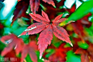 LEAVES III by Dezziree