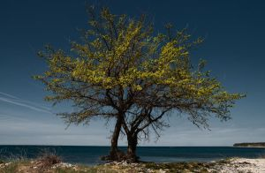 Trees near sea by lpetrusa