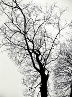 Naked tree by HelRavenheart