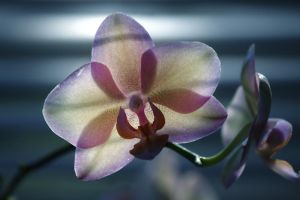 Blinds and Orchid by Karl-B