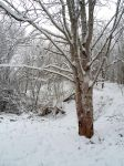 Winter forest 640 by MASYON
