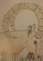 Ram by clare13