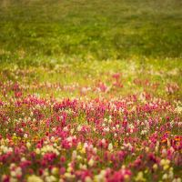 Paintbrush Meadow by jessespeer
