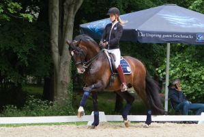 Lusitano Collected Trot Stock by LuDa-Stock