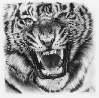 Tiger drawing by JoshuaBeatson