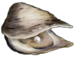 Oyster with White Pearl by TokoTime
