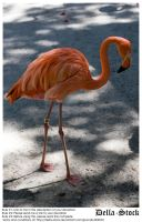 Flamingo BG by Della-Stock
