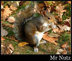 Mr Nutz by agent7even