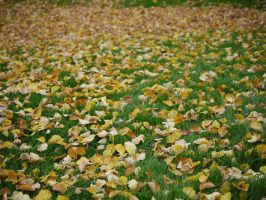 Autumn leaves. by asaluiphotography