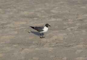 Seagull, Untouched by MLStock