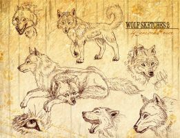 Wolf Sketches 2 by Jenrocks4ever