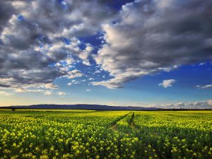 The luminous landscape pt.7. by realityDream