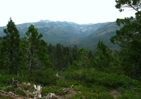 View at Tahoe National Forrest by Earthmagic