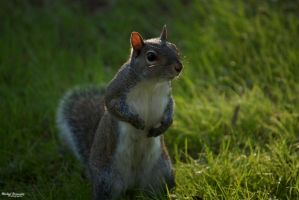 Squirrel by thatmikeguy91