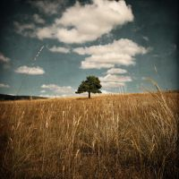 About a Tree by SebastienTabuteaud