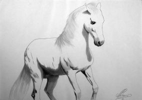 White stallion by petrogenije