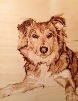 Dog on ply board wood burn :) by LUKAS-87