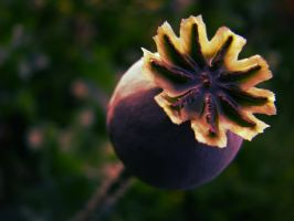 Magic freaky flower thing by daliahme