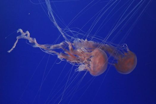 Jellyfish Stock 38 by Malleni-Stock