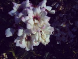 random white flower by amyhatesyouaswell
