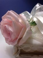 Wedding Rose by PhotElle