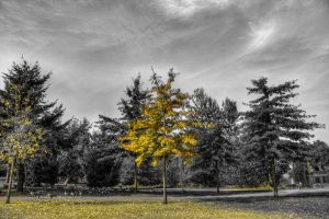 Tree HDR by jverm