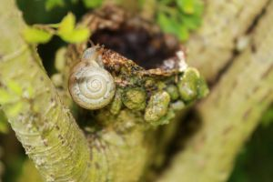 Snail 1 by rodericklal