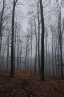 Foggy Forest 29 by sacral-stock