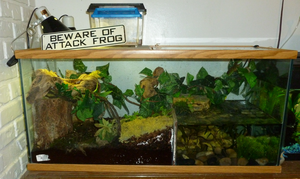 Isaiah in the 40 gal vivarium by the-only-nighthawk