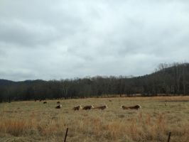 Tennessee (13/15) by ScenePika