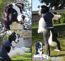 Border Collie Partial by Tsebresos