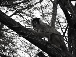 Climbing Squirrel Monkey by Raaarrrrw