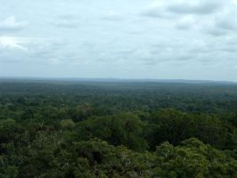 Guatemalan Rainforest by blitzuchan