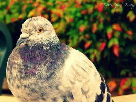 Pigeon by Tickle-Your-Fancy