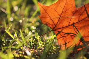 Leaves 4 by Tamamantix
