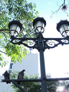 Pigeons on a Lamp Post by arrotz