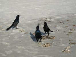 Beach and Birds 11 by Party-Hat-Cat