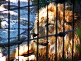 Caged Beast by LittleMissRedsPhotos