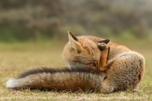 Hiding Fox by thrumyeye