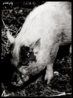Pink pig by simoner