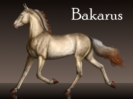 Bakarus Reference by Vizseryn