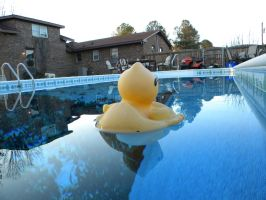 Cool Duck Leaving by Outofthisworld