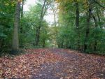 Tree 64 - autumnal path in forest by Momotte2stocks