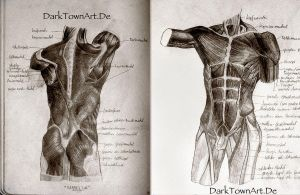 Sketchbook Classics Anatomy by ZombieSandwich