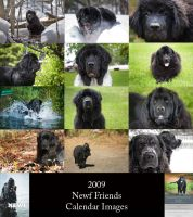 2009 Newf Friends Calendar by BlackDogBarnyard